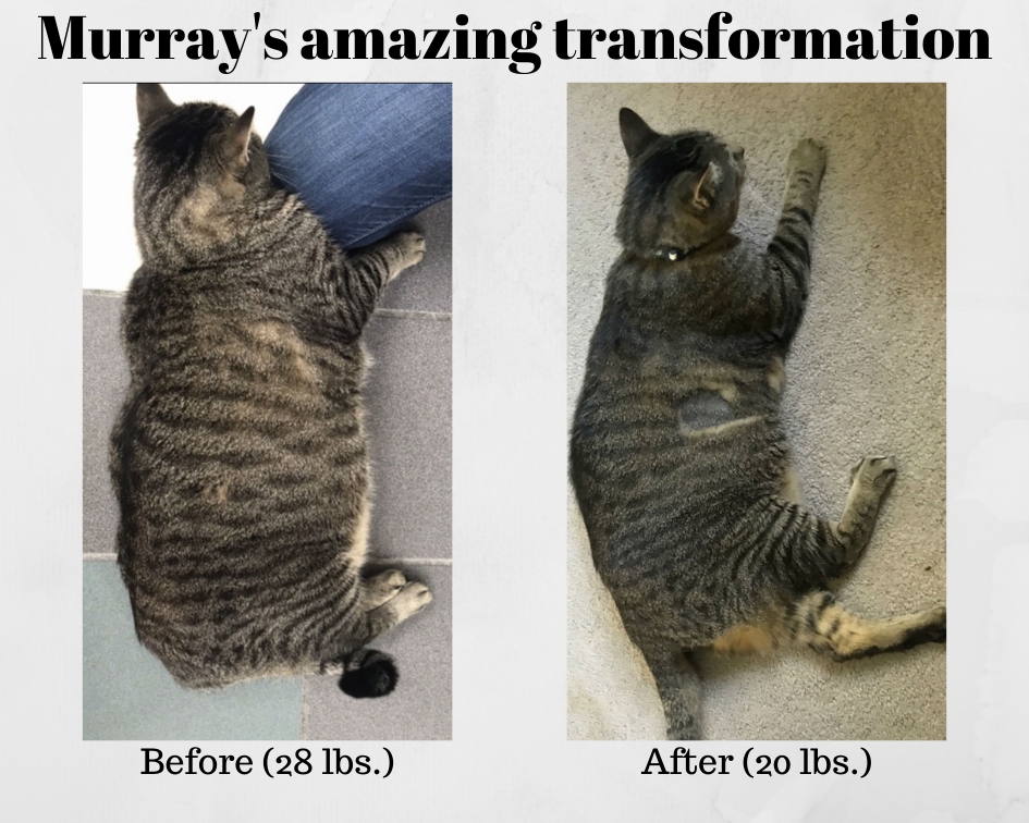 Murray before after