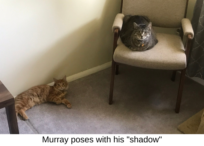 Murray poses with his shadow
