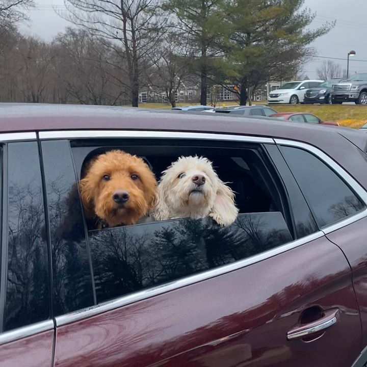 Gracie and Molly check in for curbside service before the state-mandated shutdown of grooming services.