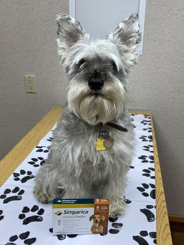 tick medication dog grand rapids veterinary clinic