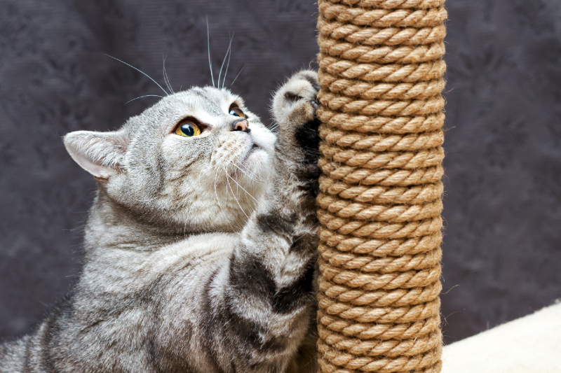 cat scratching post 242109158 Preview