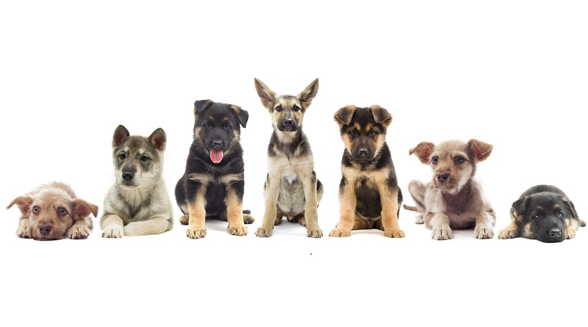 Before buying a puppy, take into consideration what characteristics the dog will have when it is an adult.